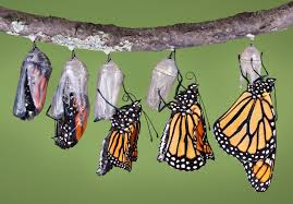 cocoon-to-butterfly-2